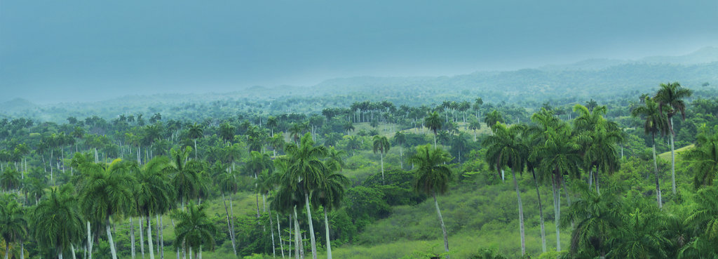 z-8410092-Panorama.jpg